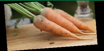 Les légumes racine unibio, carottes, navet